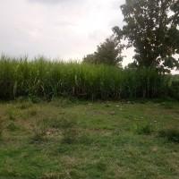 BTN Madiun - 14.Sebidang tanah SHGB No 31 luas tanah 100 m2 (Blok A17) terletak di Desa Sugihwaras, Kec Maospati, Kab Magetan.