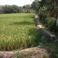 PNM Madiun: 1. Tanah SHM No. 269 luas 1716 M2 terletak di Kelurahan/Desa Kedungputri, Kecamatan Paron, Kabupaten Ngawi