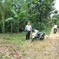BRI Pringsewu 1b - Sebidang tanah kebun seluas 671 m2 SHM No. 112 di Desa Batu Bedil, Kecamatan Pulau Panggung, Kabupaten Tanggamus