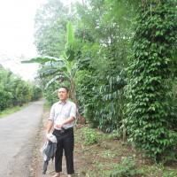 BRI Pringsewu 1c - Sebidang tanah kebun seluas 5.693 m2, SHM No. 153 di Desa Batu Bedil, Kecamatan Pulau Panggung, Kabupaten Tanggamus