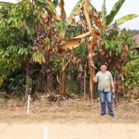 BRI Pringsewu 1f - Sebidang tanah seluas 458 m2 dan bangunan rumah, SHM No. 81 di Desa Batu Bedil, Kecamatan Pulau Panggung, Kab Tanggamus
