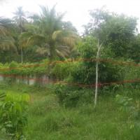 1.b. BRI Lhokseumawe: Sebidang tanah seluas 1.188 m2 berikut segala sesuatu yang ada diatasnya, di Desa Cot Girek Kandang  Kec. Muara Dua,