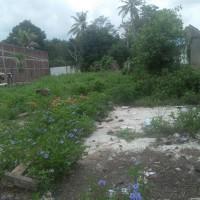Kurator:1 bidang tanah dengan total luas 2.500 m2 SHM No.11/Ameroro di Kab. Konawe, Prov. Sultra.