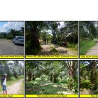 KSP Area Rantauprapat: b. Tanah luas 19.977 M2 & tanaman kelapa sawit (SHM No.274) Desa/Kel. Janji, Kec.Bilah Barat, Kab.Labuhanbatu