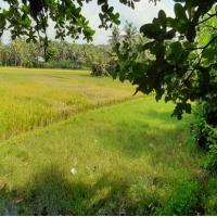 Bjbs Tasik 8. Tanah darat, LT 1402 m2 di Kp.Sindangraja, Ds.Sindangjaya, Kec.Cikalong, Kab.Tasikmalaya