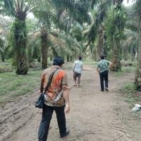 @BNI R3 PLMBG : sebidang tanah kebun sawit luas 17.660 m2, sertifikat SHM, terletak di Kabupaten Muaro Jambi