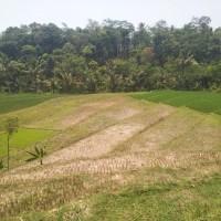 Sekartama Batang: 1 (satu) bidang T SHM 829 Lt 2103 di Ds. Toso, Kec. Bandar, Kab. Batang