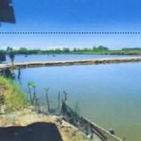 Bank Mandiri: Sebidang Tanah seluas 30.000 M2, sesuai SHM No. 00283, terletak di Kec Belopa Utara, Kabupaten Luwu.