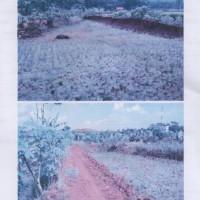 BRI Banjarnegara: Sebidang tanah, SHM No.305, luas ±714 m2, berikut segala sesuatu di atasnya, di Kelurahan Kenteng, Madukara, Banjar
