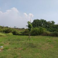 Tim Kurator PT.Hansindo Indonesia dan Hendra Basoeki (Dalam Pailit): Sebidang tanah kosong luas 59.371 m2 di Jl.Ancol Timur Blok.E-7/A Jakut