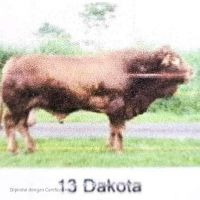 BBIB Singosari - 1 (satu) ekor sapi pejantan an. Dakota kondisi afkir