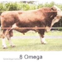 BBIB Singosari - 1 (satu) ekor sapi pejantan an. Omega kondisi afkir