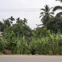 BRI Pontianak Barito 1A : 2 bid. tanah kosong, SHM No.5093 (2.760m2)&SHM No.5553 (2.781m2), Desa Pal IX, Kec. Sungai Kakap, Kab. Kubu Ra