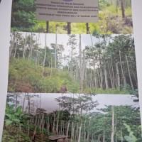 1 ( Satu ) Paket barang Inventaris / Aset Lancar berupa Pohon Sengon 12 Batang dan Jabon 65 batang satker PPPPTK BOE