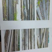 (Kejari Barru) Rampsan Kayu jenis meranti 175 batang kayu dan kayu jenis ulin 41 batang kayu di Kantor Kejari Barru, Kab. Barru