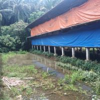 PT Sinta Prima Feedmill, T/B di Kampung Candali, Desa Candali, Kec Rancabungur, Kab Bogor