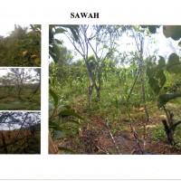 PN Banyuwangi - Sebidang tanah seluas 935 m2, beserta segala sesuatu diatasnya, sesuai SHM No. 119/Tambakrejo, Banyuwangi