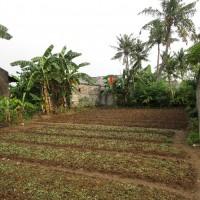 1 (satu) bidang tanah seluas 667 m2 di Kabupaten Bekasi