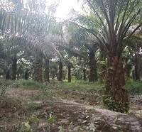 9.c.PT. BRI Cab. Tanjungpandan Sebidang Tanah Luas 9.758 m2 SHM No. 00680/Sijuk