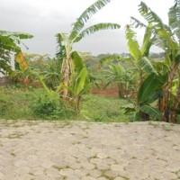 Harta Pailir: Tanah kosong di Jl. Jangli Gabeng Kota Semarang
