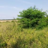 3.BRI Medan SM.Raja,Dijual satu paket Tanah Kosong  total luas 10.814 m2, di Dusun II Desa Pematang Sijonan,Kec.Perbaungan,Serdang Bedagai