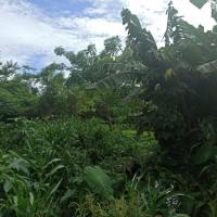 Sebidang tanah seluas 443 m2 terletak di Kel. Drangong, Kec. Taktakan, Kota Serang BRI PANDEGLANG