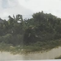 PT. Bank BRI Cabang Abepura: 1 (satu) bidang tanah kosong seluas 220 m2  sesuai dengan SHM No. 04005, terletak di Kota Jayapura