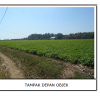 [KURATOR] LOT 2. tanah kosong, SHM No.87, LT 6570m2, di Ds Purworejo, Kec. Jenu, Kab. Tuban