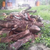 Polres TTU - 1 (satu) paket kayu jati bulat yang terdiri dari jenis Eukaliptus, Akasia dan Rimba Campuran