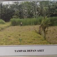 PN Sleman : 1 paket bidang tanah terdiri dari 3 bidang tanah SHM No.2079, 2080 dan 2081, luas total 2.594 m2 di Hargobinangun, Pakem, Sleman