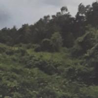 PT. Bank Mandiri RCR: 1 (satu) bidang tanah kosong seluas 9650 m2  sesuai SHM No. 185, di Kabupaten Merauke