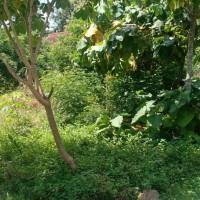 BRI Madiun : 1 bidang tanah SHM 320 luas 531 di desa Kranggan, Kec. Geger, Kab. Madiun