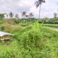 Kejagung 5. Sawah, LT 2.470 m2 di Blok Gordah, Ds.Jayawaras, Kec.Tarogong Kidul, Kab.Garut