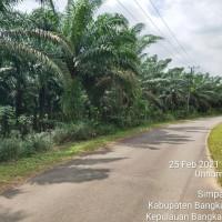 Pool Advista : a. Tanah seluas 25.780 m2 SHM No.910 & 912 di Jl Talang Balai RT13, Ds Terak, Kec Simpang Katis, Kab Bangka Tengah