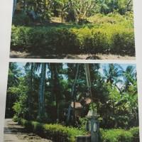 BRI Gombong: sebidang tanah SHM No. 480 luas 591 m2 di Desa Rantewringin Kec. Bulus Pesantren Kab. Kebumen