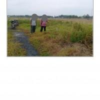 PT. PNM : 2b. Tanah Perumahan SHM Nomor 2846 Luas 151 M2 Desa Saing Rambi, Kecamatan Sambas, Kab. Sambas