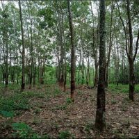 PT. PNM  3. : Sebidang Tanah Perkebunan, SHM No 116 Luas 8.744 M2 Desa Setia Jaya, Kecamatan Teriak, Kabupaten Bengkayang