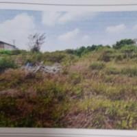 Harta Pailit: Tanah pertanian di Desa Mranak Kecamatan Wonosalam Kabupaten Demak