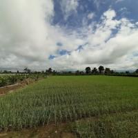 Bank Sumut -2. Tanah seluas 3.765 M2 di Desa/Kel. Lingga Julu, Kec. Simpang Empat, Kab. Karo