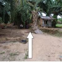 BRI Tebing Tinggi - 3a. Tanah seluas 1.402, di Desa/Kel. Penggalangan, Kec. Tebing Syahbandar, Kab. Serdang Bedagai