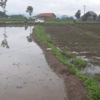 PA TEMANGGUNG (Eksekusi) : Tanah Sawah seluas 1.075 m2, SHM No. 2051, di Desa/Kel. Kedu, Kec. Kedu, Kab. Temanggung