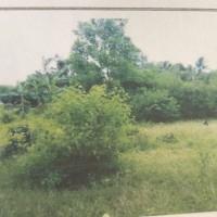 Lot 1 BPR SAU :Sebidang tanah berikut bangunan lt 1.314 m2 sesuai SHM No.944 di Desa Kota Dalam Kec Sidomulyo Lampung Selatan