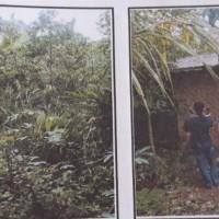 Lot3 BPR SAU: Sebidang tanah berikut bangunan lt 2.410 m2 sesuai SHM No.0656 di Desa Wiyono Kec Gedong Tataan Kab Lampung Selatan , lampung