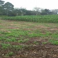 PT PNM 3 : Tanah Pertanian SHM No. 1594 LT 16.007 M2 terletak Desa Bange, Kec. Sanggau Ledo, Kab. Bengkayang