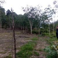 PT. PNM 4a : Tanah pertanian SHM No 392 LT 8.167 M2 terletak Desa Jesape, Kec. Ledo, Kab. Bengkayang