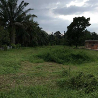 Harta Pailit-bidang tanah seluas 10.038 m2 terletak di jalan perniagaan, Ds. Arang Condong, Kec, Stabat, Kab.Langkat