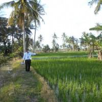 1c. Sebidang tanah sawah seluas 3.528 m2 yang terletak di Desa Pematang Cermai, Serdang Bedagai