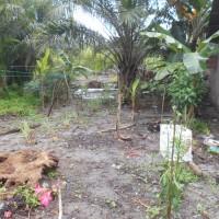 4b. Sebidang tanah seluas 596 m2 yang terletak di Desa Sentang, Kec. Teluk Mengkudu, Kab. Serdang Bedagai