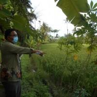 4d. Sebidang tanah sawah seluas 656 m2 yang terletak Desa Lubuk Rotan, Kec. Perbaungan, Kab. Serdang Bedagai