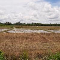 PT. Bank BTPN, Tbk Area NAD-Tanah persawahan seluas 12.486 M2 sesuai SHM No. 36 An. Sapiah, Furqan, Mukhramati.